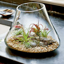 Different Kinds Of Terrariums Plant Green Dubai